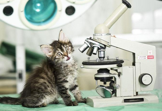 Http Www Atlasobscura Com Articles In  A Cat Coauthored A Physics Paper